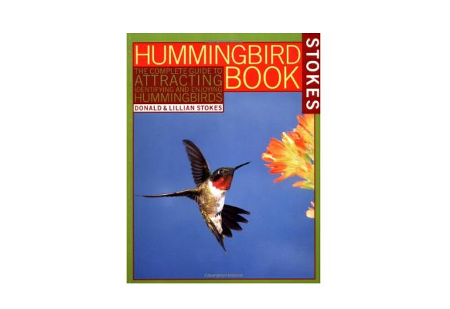 hummingbird stokes coloring g book